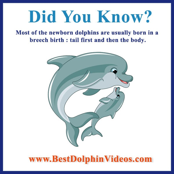 25+ best ideas about Dolphin facts on Pinterest | Fun facts about ...