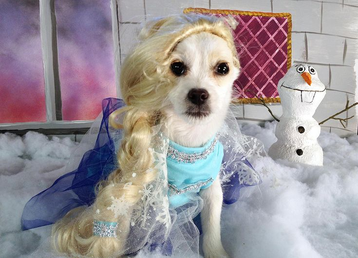 We're Thankful for These Puppies Dressed as Disney Characters | Oh My Disney | Awww