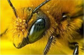 Afbeeldingsresultaat voor tropical forest bees