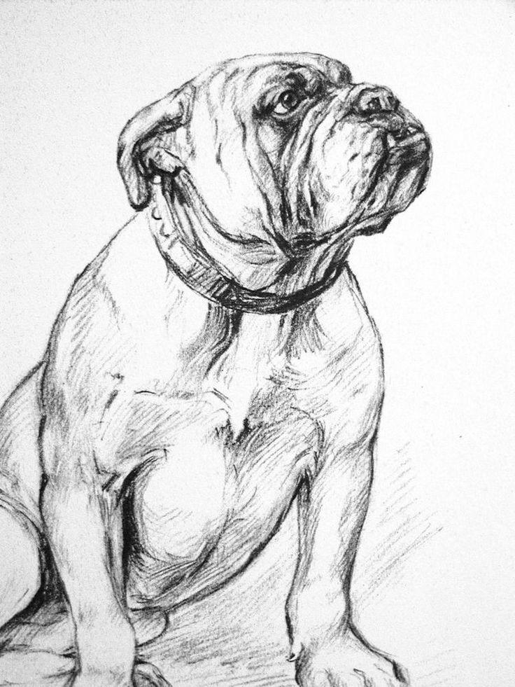 K.F. Barker 1933 Portrairt of BULL DOG BULLDOG Incorruptible Vintage Art Matted #Vintage