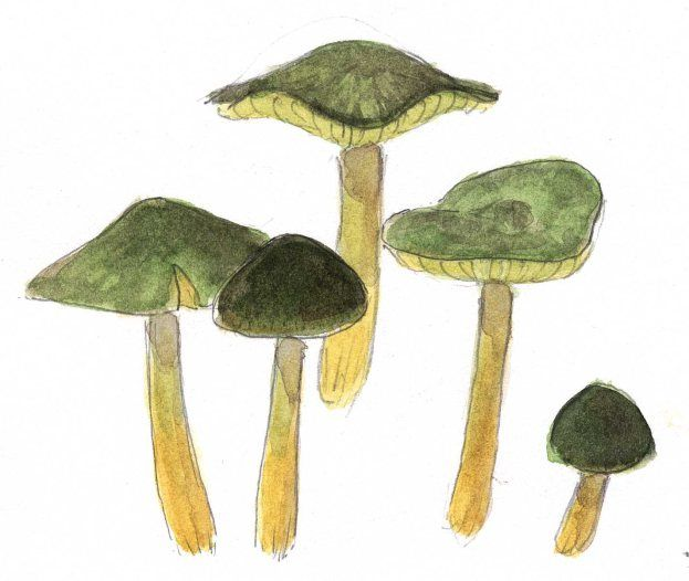 How to draw nature items with a wet look