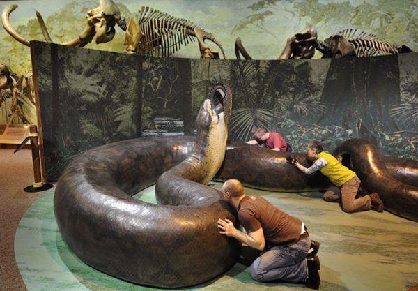 เรียนภาษาอังกฤษ ความรู้ภาษาอังกฤษ ทำอย่างไรให้เก่งอังกฤษ  Lingo Think in English!! :): Titanoboa งูที่ใหญ่และน่ากลัวที่สุดในโลก แต่สูญพัน...