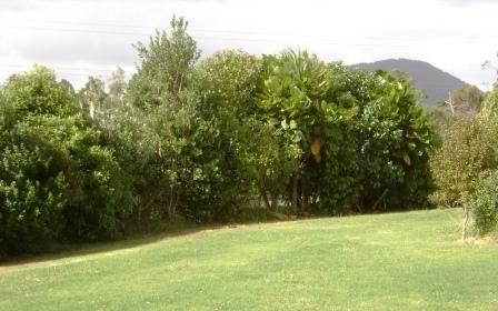 Image result for revegetation planting nz
