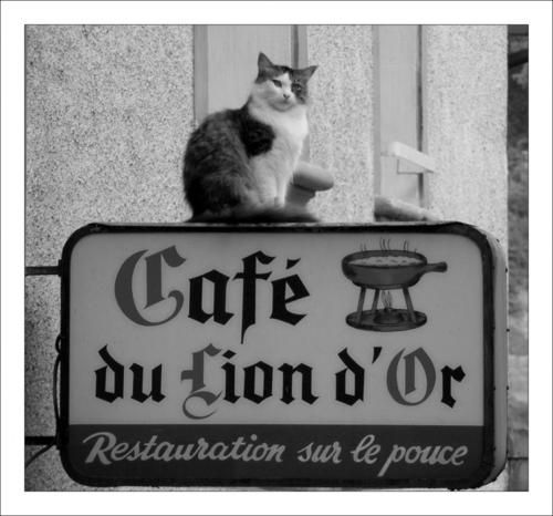 Golden Lion Cafe, France: Du Lion, Adorable Kittenscat, Lion Dors, Lion Cafe, Paris France, Vintage Signs, Chat, Cafe Cat, Golden Lion