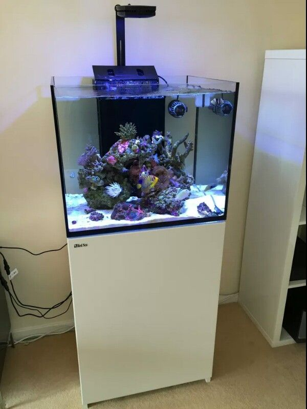 Red Sea Reefer 170 With Ai Prime Light Marine Aquarium