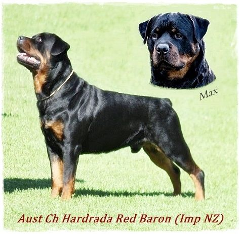 Hardrada Rottweilers Top Best In Show Winning Lines