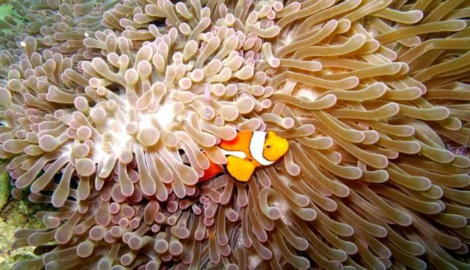under sea raja ampat pined from http://goo.gl/KDmsRJ