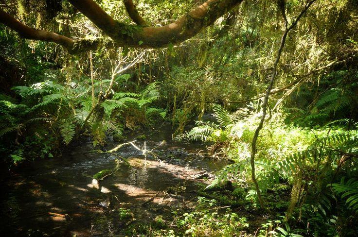 Petrohue vegetation