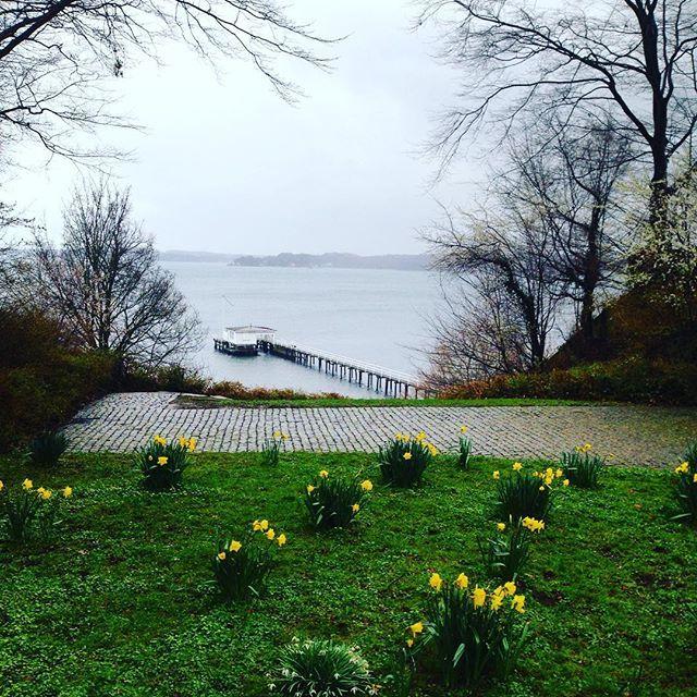 Kiel ist bei jedem Wetter schön ❤️ #instapic #kiel #kielerförde #kielerwetter #ostern2016 #osterglocken #ostsee #ostseeküste #lieblingsland #derechtenorden #derfrühlingkommt #nature #mimisfoodblog #flowers #balticsea #sea #spring #springtime #soschön #hirschfeldblick #instaphoto #nature_perfection #naturelover #naturephotography