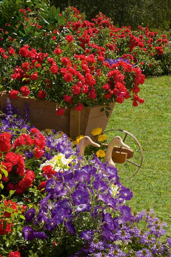 Flower Carpet Scarlet with mixed annuals provides season-long color.