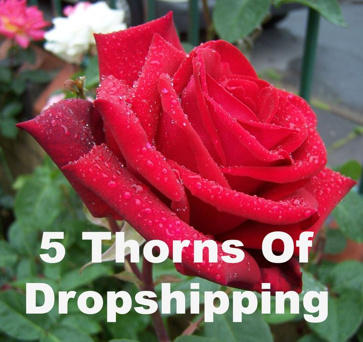The 5 Pains In Starting A Drop Shipping #Business