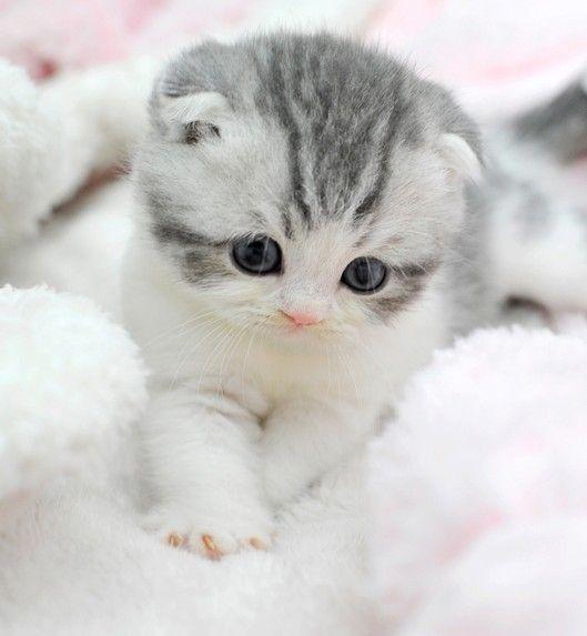 #Kätzchen #Katzen #Tiere #Süss #Entzückend   – schwarze-katzen-1 –