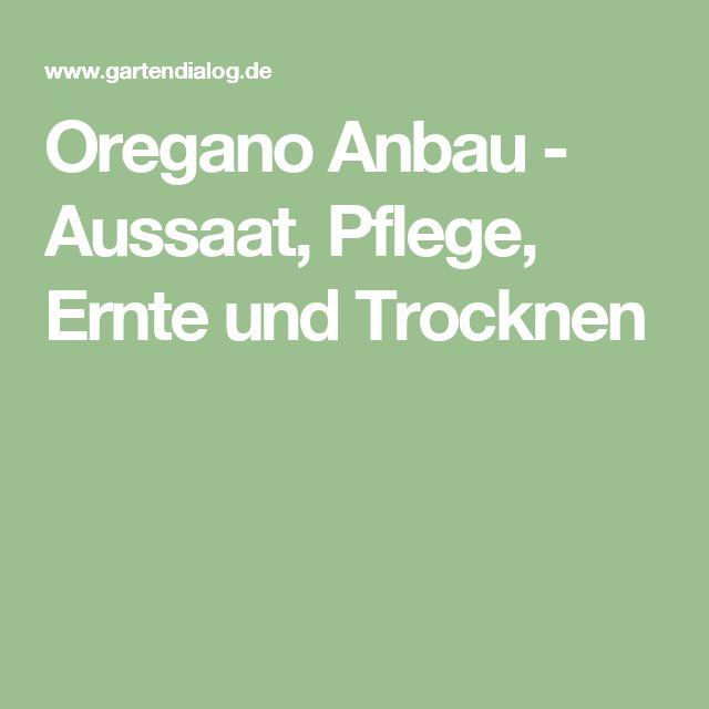 Oregano Anbau - Aussaat, Pflege, Ernte und Trocknen