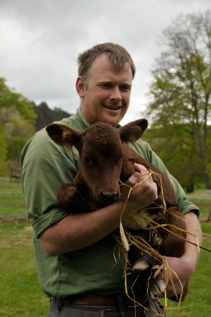 Johan Viding som håller kalven i sin famn äger Ringamålakorna och getterna som visas på Kulturens Östarp under sommarhalvåret. Foto: Jessica Ljung/Kulturen