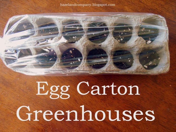 Egg Carton Greenhouses....this is a great way to start seeds in your house. The dirt stays moist and the cartons fit perfectly in windowsills. It's also a fun project to do with the kids!