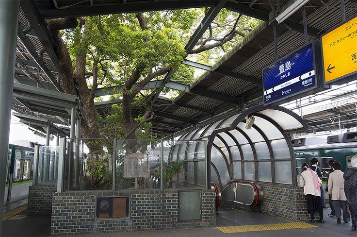 A estação de trem japonesa construída ao redor de uma árvore de 700 anos   IdeaFixa