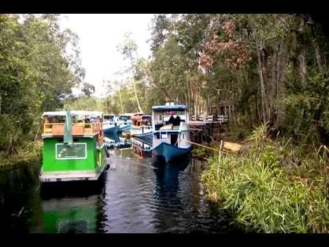 River Cruise Tours in Camp Leakey,Borneo Indonesia