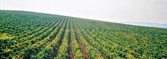 Al forum Wine2Wine di Vinitaly, Uiv e Federvini si è discusso del futuro di vino e viticoltura. Fondamentale è la qualità dell'ambiente per cui basta alla viticultura intensiva. Parole chiave sono sostenibilità, tecnologia e attenzione al consumatore