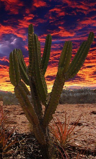 Pôr-do-sol no sertão do Ceará, estado do Brasil.