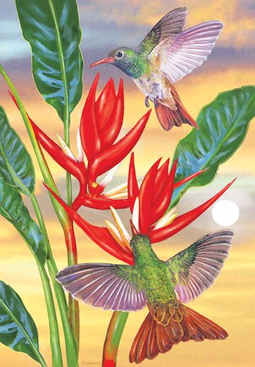Buff Bellied Hummingbirds And Red Christmas Heliconia by Rosiland Solomon