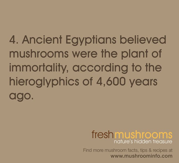 It's Day 4 of National Mushroom Month! SHARE this fun fact about mushroom history!: Mushroom Month, Fresh Mushrooms, Fun Facts, Facts Ma Am, Mushrooms Education, Mushroom Mania, Mushroom Facts, Fungi Facts, Mushroom History