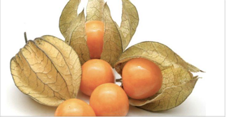 """Golden berry, também conhecida como fisális (Physalis peruviana) é uma fruta silvestre que tem o formato de uma concha delicada, muito parecida com a textura de um papel.Dentro dessa """"concha"""", há um fruto redondinho, amarelo e de sabor meio doce, meio azedo."""