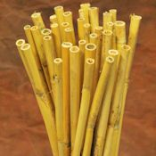 Dried Bamboo Stalks - Natural Bamboo Sticks and Shoots - DriedDecor.com