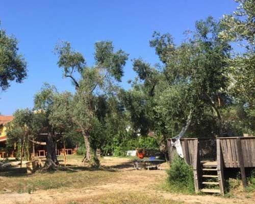 Honigtal auf Korfu: In unserem riesengroßen Garten im Honigtal auf Korfu, umringt von knorrigen jahrhundertalten Olivenbäumen, stehen ein überdachter Sandkasten, eine Tischtennisplatte, bunte Hängematten, Kletterbäume, Olivenholz-Schaukeln und ein wunderschöner Holz-Pavillon. In diesem Garten leben eine Ziegenfamilie, etliche Hühner und drei Perlhühner und dazwischen springen den ganzen Tag - oft bis spät in die Nacht hinein – glückliche Kinder herum, vielleicht auch bald Ihre.