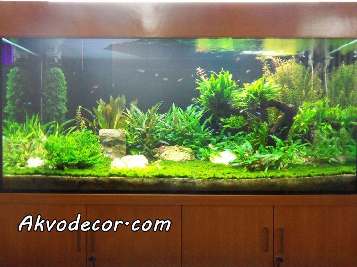 Akvodecor adalah unit usaha yang bergerak di bidang dekorasi air, khususnya aquascape, aquarium air laut, dan kolam koi