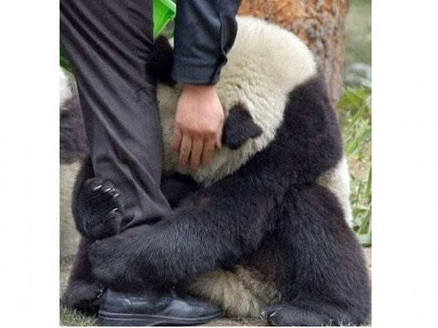 Panda bear during Japan's earthquake... Such a beautiful yet really sad picture.