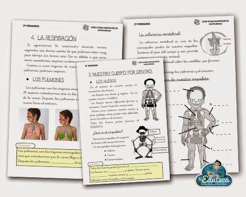 RECURSOS PRIMARIA | Unidad didáctica del cuerpo humano para 2º de Primaria