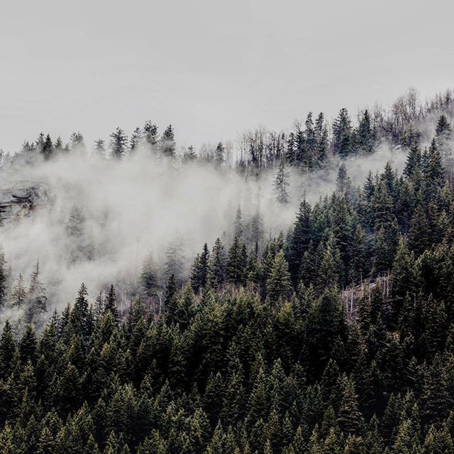 """""""He heard her in his heart - whispering from the mist""""- John Geddes. @onefineprint Whispering Print from Elizabeth Bull⠀From the photographer: """"The Canadian mountain landscape truly captivates me. The ethereal sight of mist-clad pines jutting out from the rocky mountainside draw me and my camera every time I visit."""" - Elizabeth Bull⠀ ⠀ #rockies #canada #canadian #mountains #mist #forrest #photography #print #art #giclee"""