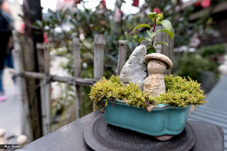 Small World - A small sculpture that is part of the bonsai decoration in a store in Kyuoto