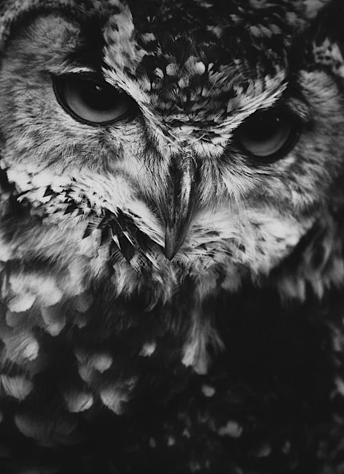 Life lessons from Owls: Watch and listen before you make a move.