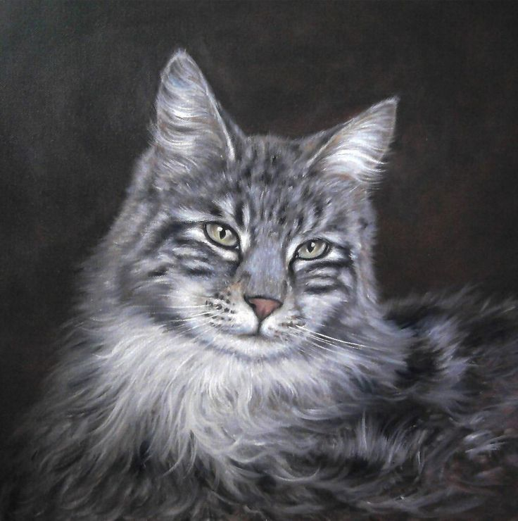 Cat by Simon Zoltan by ZoltanSimon on DeviantArt