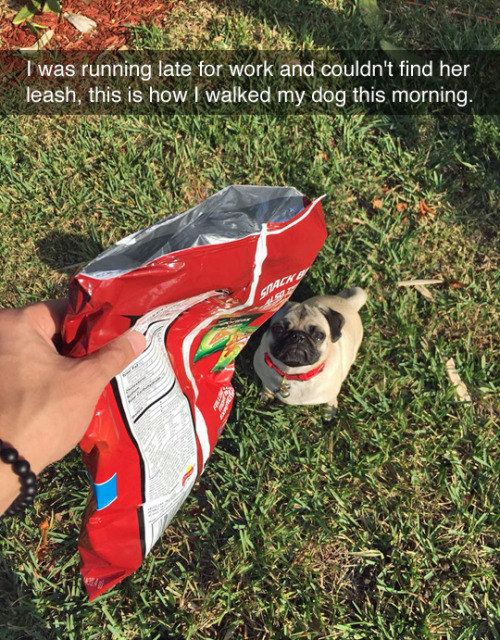 This genius dog owner.   28 Snapchats That Will 100% Make You Smile