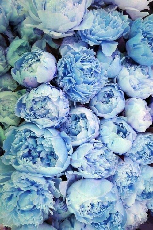 Blue Peonies                                                       …
