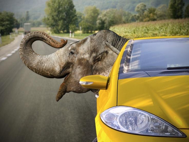 Elefaht shøre bil