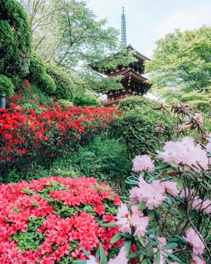 "Location:Nara Japan ・ This is ""Okadera"" in Nara Prefecture. Rhododendron is best time to see. ・ 石楠花が見頃になった岡寺続き。こちらは歩きながら撮影場所探しましたが良い学びとなりました。定番以外の画角探し楽しい(≧∀≦) さて、今日は曇り。たまった現像一気にやります! ・ ・ #igersjp #japanawaits #instagramjapan #dairy_photo_jpn #ig_japan #Lovers_Nippon #icu_japan #japan_of_insta #team_jp_ #bestjapanpics #東京カメラ部 #tokyocameraclub #wu_japan #photo_shorttrip #pics_jp #ptk_japan #art_of_japan_ #phos_japan #kf_gallery #wp_japan #photo_jpn #bestphoto_japan #retrip_nippon #whim_life..."