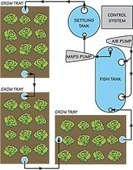 35 best images about garden of eden aquaponics on for Fish and farm sf