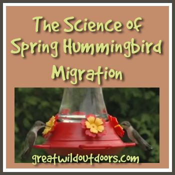 The Science of Spring Hummingbird Migration