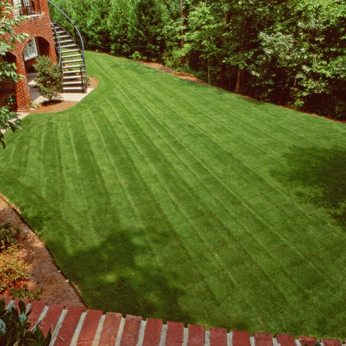 Superb Seed Your Lawn: How And When To Plant Grass Seed