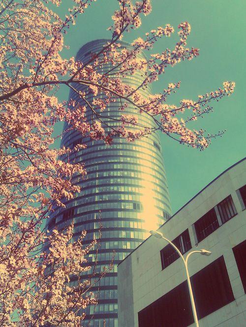 Skytower. Wroclove