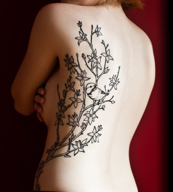 Forsythia and chickadee tattoo outline by Kurt Brown at The Gallery Tattoo Studio in Concord, MA.