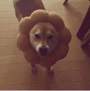 Cute doge http://ift.tt/2fLGrLb