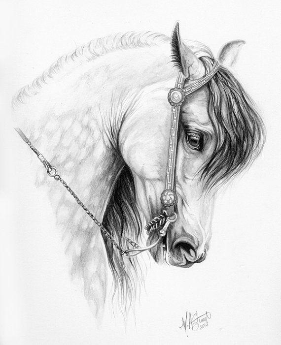 Original ANDALUSIAN horse art drawing Spanish by EquineTreasures - Sold