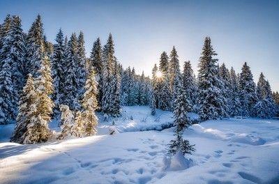 Winter Wonderland by Tammy_Lee