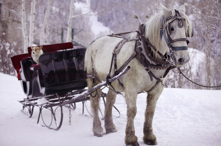 An old-fashioned Park City sleigh ride is a popular option for many people in search of an all-round winter vacation experience. Gather the family or friends together and go dashing through the snow.