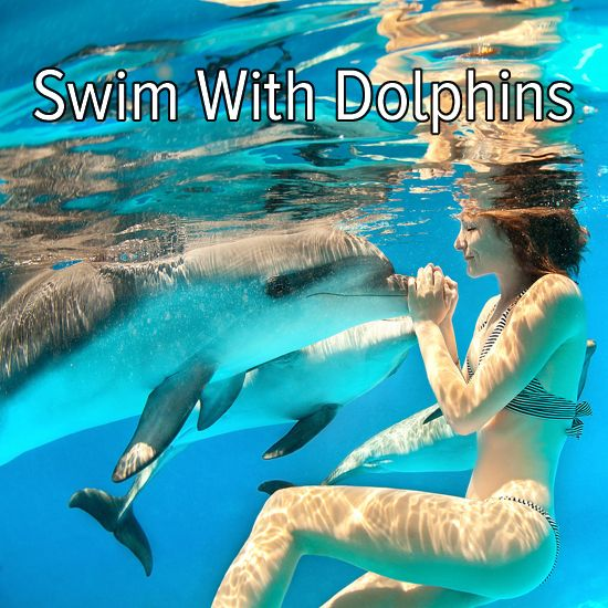 Bucket list: travel somewhere tropical to swim with dolphins!