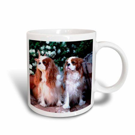 3dRose Two Blenheim Cavalier King Spaniel, Ceramic Mug, 11-ounce